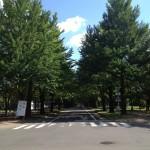 お花見 奈良吉野山 桜と歴史を見る