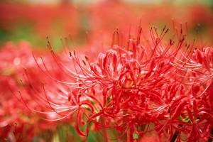 flowers-2336745_640
