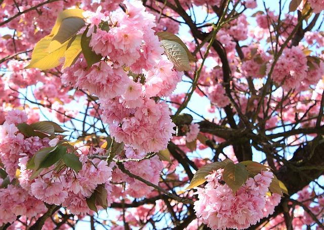 花の祭典「フラワードリーム」知ってますか?