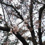 2019年4月1日「新元号」の発表の日!
